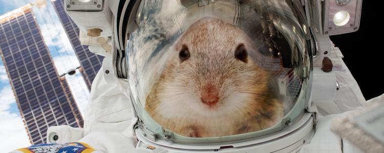 Мыши и космос